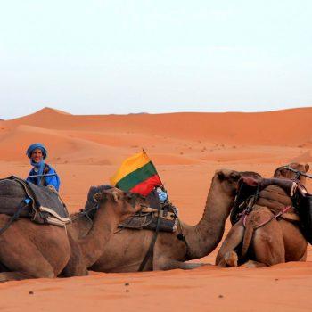Trispalvė ir Afrikoje trispalvė.